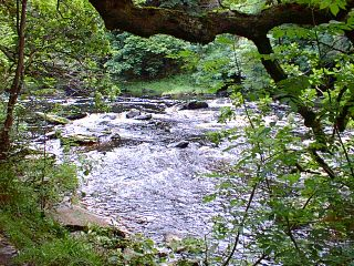 A view on the river Roe